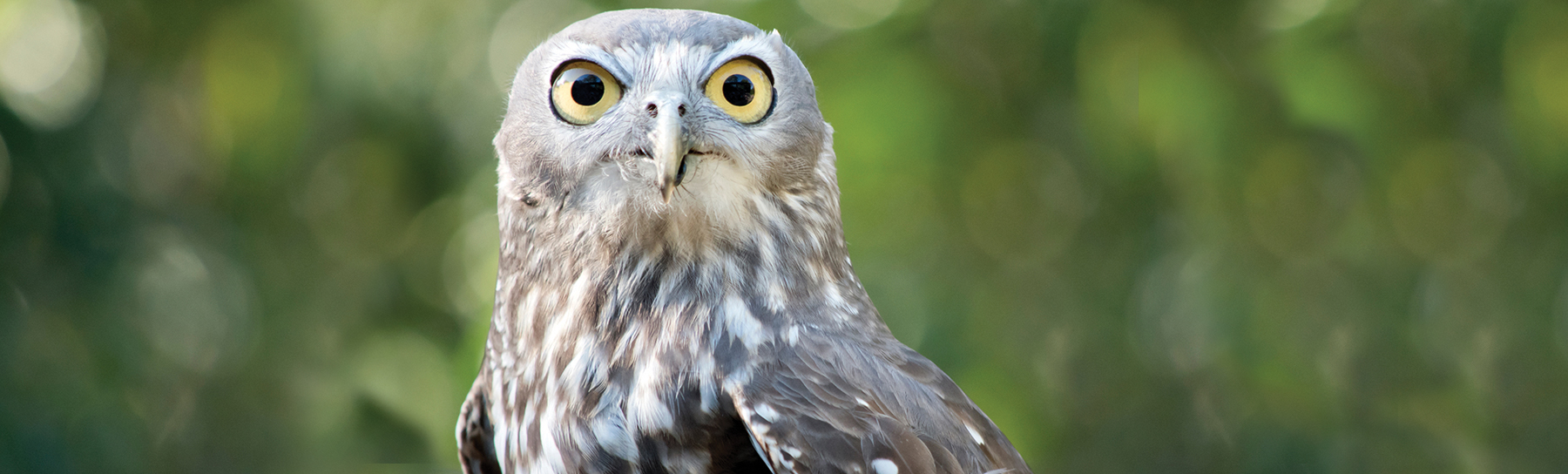 Owl-Donate-Page-Banner.jpg