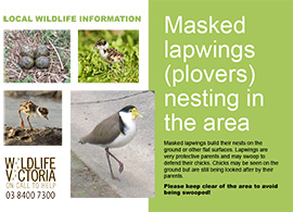 25 Wildlife Signs Masked Lapwings