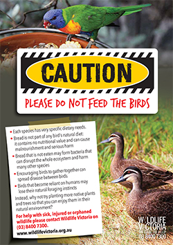 Poster do not feed the birds